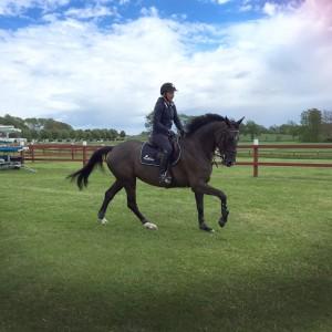 Utbildningar för dig och din häst